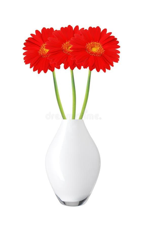 De mooie rode bloemen van het gerberamadeliefje in geïsoleerde vaas stock fotografie