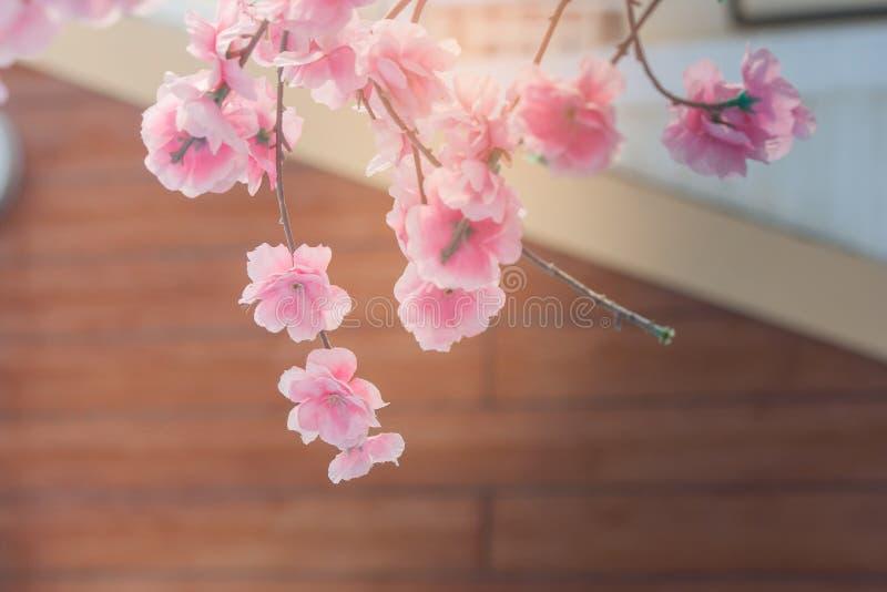 De mooie roze bloem of de sakurabloem komt met bruine muur van gebouwen op de achtergrond tot bloei Zachte nadruk stock afbeeldingen
