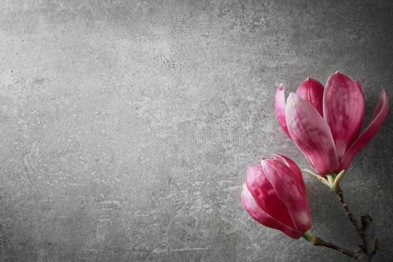 De mooie Roze Bloemen van de Magnolia stock fotografie