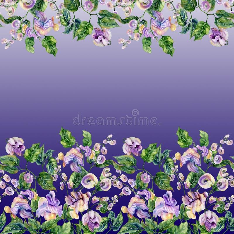 De mooie takjes van de slakwijnstok met purpere bloemen op gradiëntachtergrond Naadloos bloemenpatroon, grens Het Schilderen van  royalty-vrije illustratie