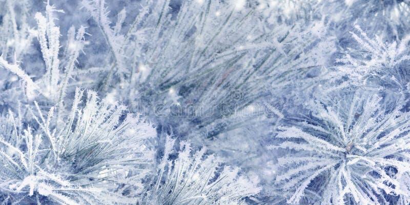 De mooie takken van de sneeuw nette die boom met vorst, close-up worden behandeld De blauwe achtergrond van Kerstmis royalty-vrije stock afbeelding