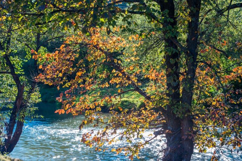 De mooie toneelmening van Olt-rivier, nadruk over de oranje beuk gaat weg stock afbeelding