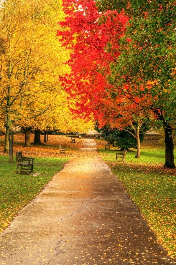 De mooie trillende bosscène van de Daling van de Herfst stock afbeeldingen