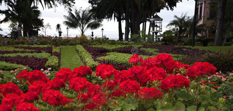 De Mooie Tuin van het Gouverneurspaleis in Funchal op het Eiland Madera Portugal stock foto's