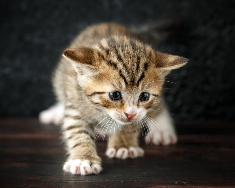 De mooie uiterst kleine katjes van de babygestreepte kat met gestreept bont stock afbeelding