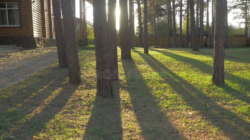 De mooie verfraaide overladen weg van de huistuin met bomen omringt gras Mooie achtertuin op een Zonnige dag stock foto's