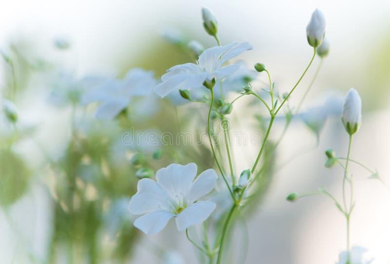 De mooie verse witte bloemen, vatten dromerige bloemenbackgroun samen royalty-vrije stock foto's