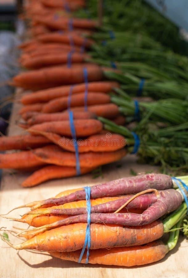 De mooie verse zoete organische wortelen in verschillende kleuren, sinaasappel, purple, op groene stammen in bossen sluiten omhoo royalty-vrije stock afbeeldingen