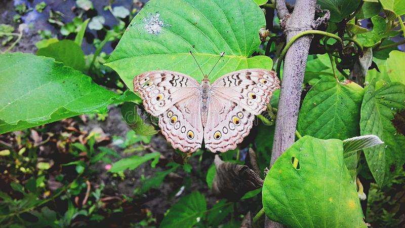 De mooie vlinder blootgestelde winter met zijn kleur stock foto
