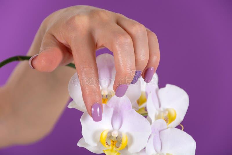 De mooie vrouwelijke hand met een lilac kleurenspijkers poetst gel en de mooie decoratie van de orchideebloem op purpere achtergr stock afbeeldingen