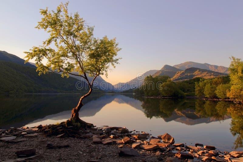 De mooie Welse Bergen wezen nog in op wateren van meer Llyn Padarn bij Eenzame Boom Llan Beris Wales stock foto