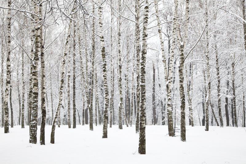 De mooie winter birchwood stock foto