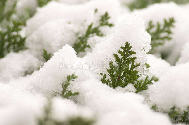 De mooie winter met sneeuw behandelde installaties royalty-vrije stock foto's