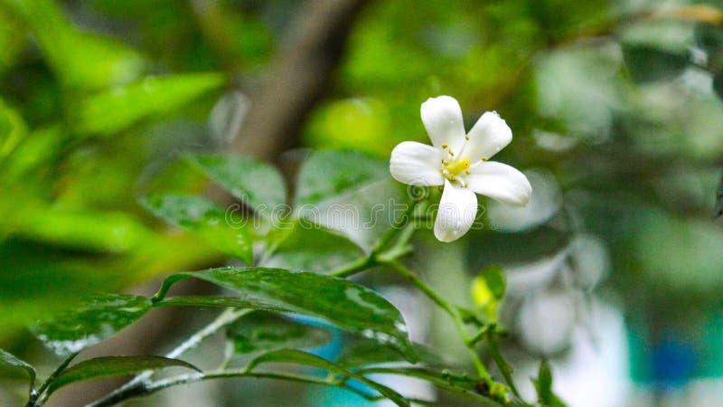 De mooie witte bloemen zien eruit royalty-vrije stock foto's