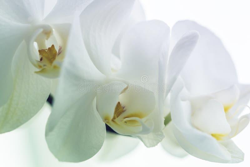 De mooie witte orchidee, sluit omhoog royalty-vrije stock foto's