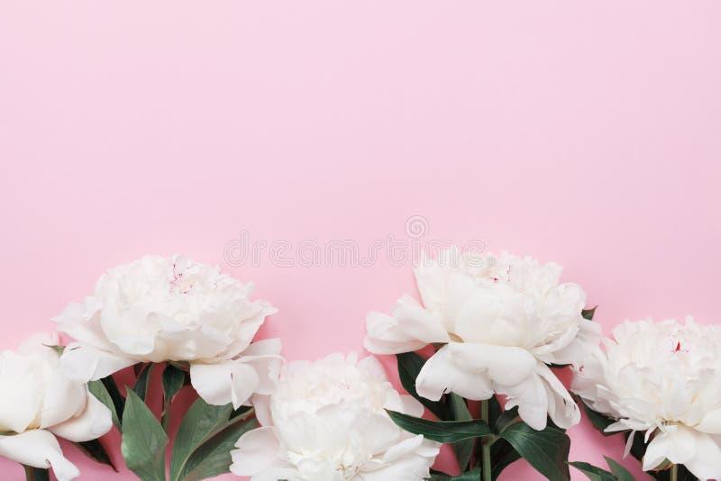 De mooie witte pioenbloemen op roze de bovenkantmening van de pastelkleurlijst en vlak leggen stijl Bloemengrens voor de dagkaart royalty-vrije stock afbeeldingen