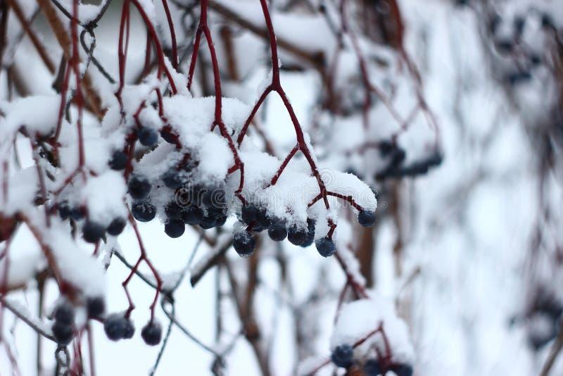 De mooie witte winter Sneeuw en ijzig stock fotografie