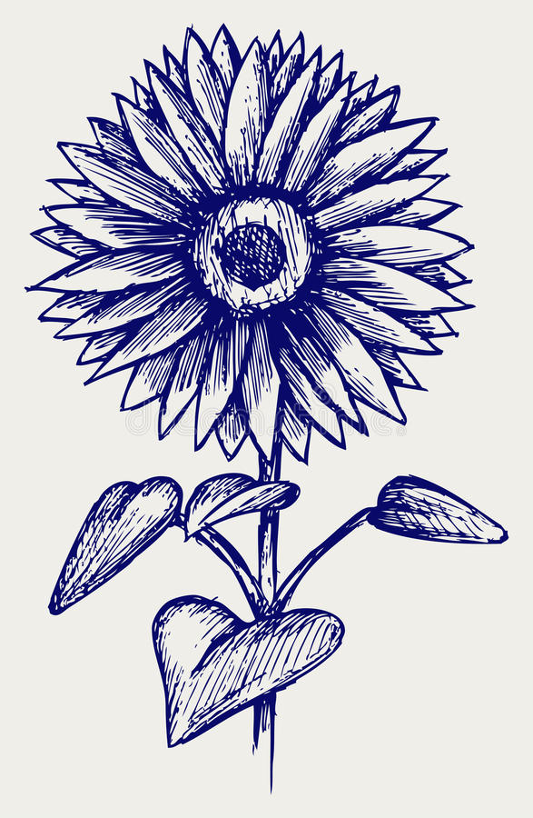 De mooie zonnebloem van de illustratie stock illustratie