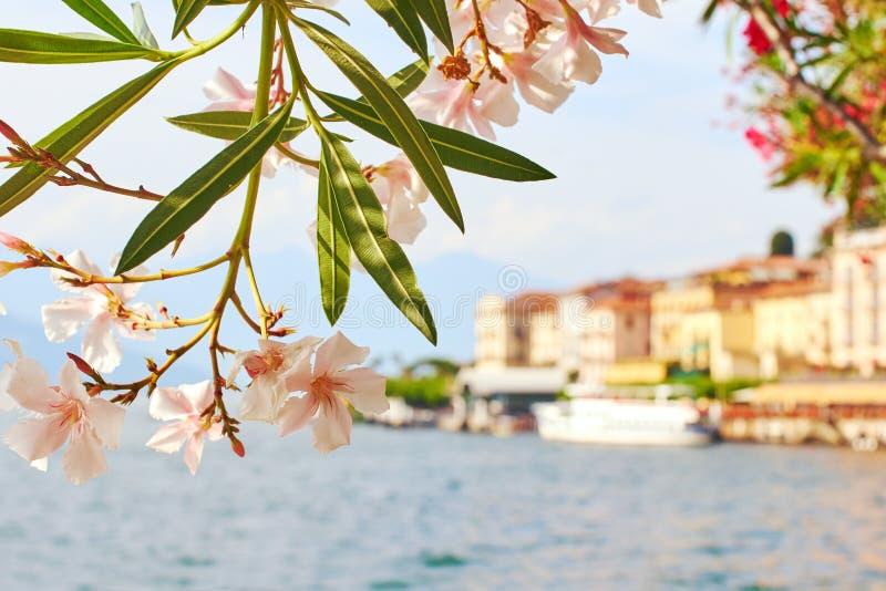 De mooie zonnige de zomermening van Bellagio stad bij meer Como in Italië met bloeiende neriumoleander bloeit, schepen en royalty-vrije stock foto's
