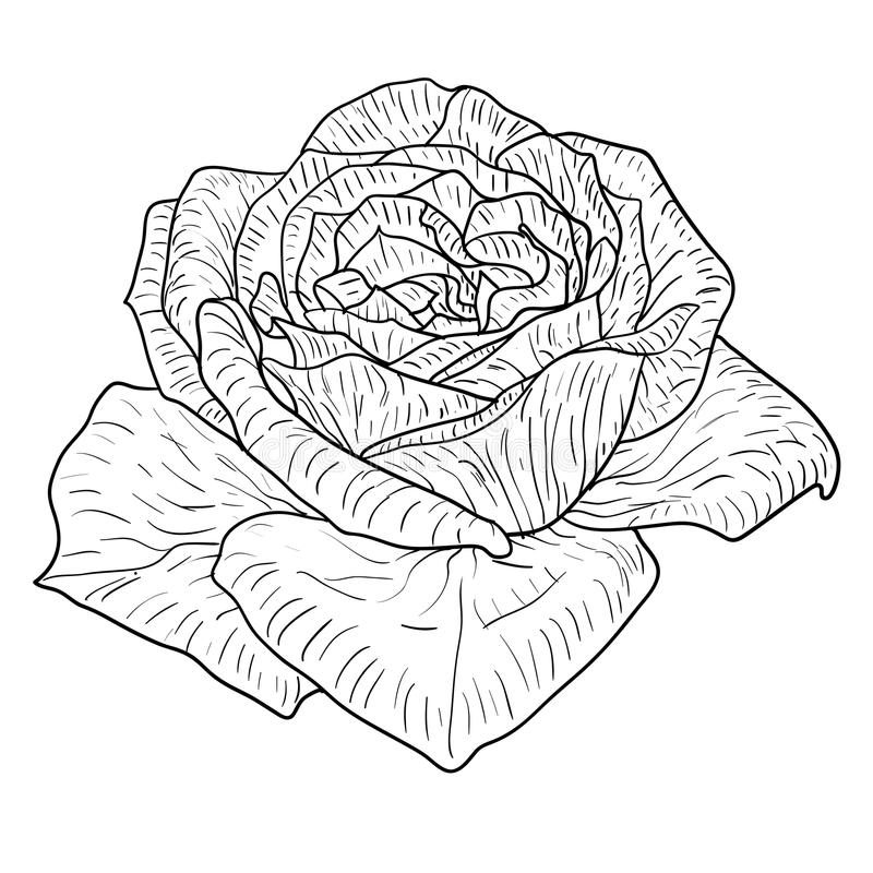 De mooie zwart-wit zwart-witte schets, nam geïsoleerde bloem toe vector illustratie