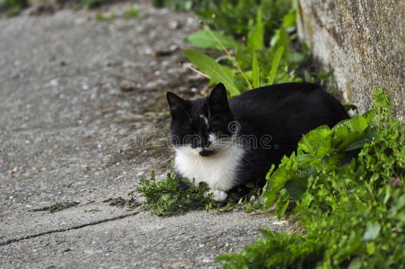 De mooie zwarte witte kat zit op beton Huisdier openlucht stock fotografie