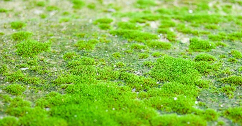 De mossen zijn ter plaatse gegroeid stock fotografie