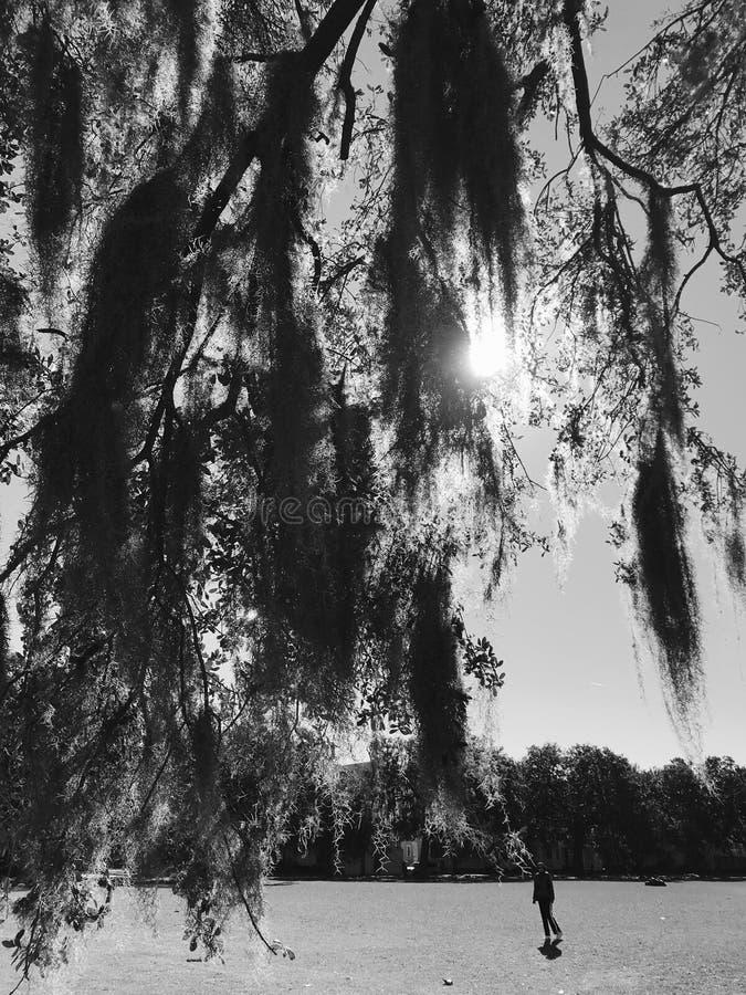 De mossiga träden av Forsyth parkerar i savannahen, Georgia arkivbilder