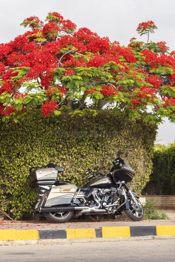 De motorfiets van Davidson van Harley stock afbeelding