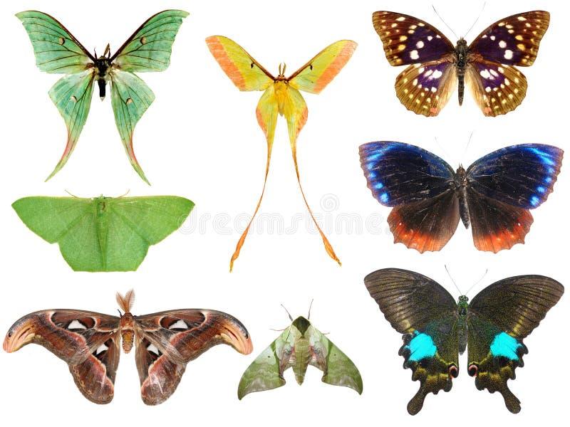 De motteninzameling van de vlinder stock foto's