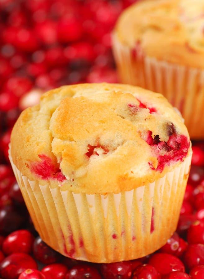 De Muffins van de Amerikaanse veenbes royalty-vrije stock foto's