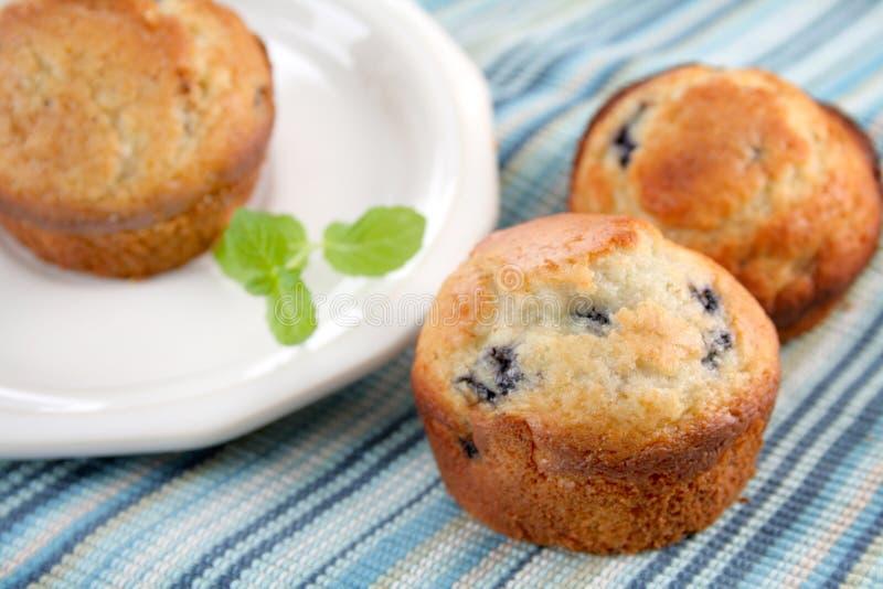 De Muffins van de bosbes stock fotografie