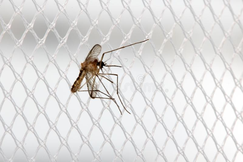 De mug zit op een gordijn bij een venster royalty-vrije stock afbeelding
