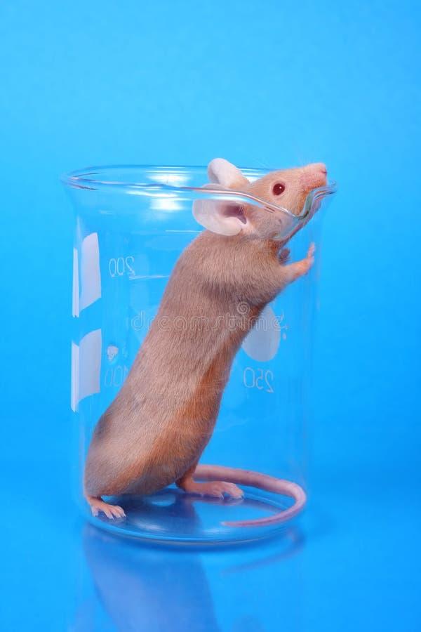 De muis van het laboratorium stock fotografie