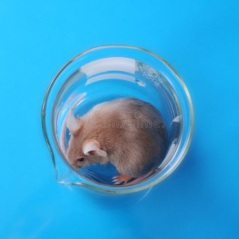 De muis van het laboratorium royalty-vrije stock foto
