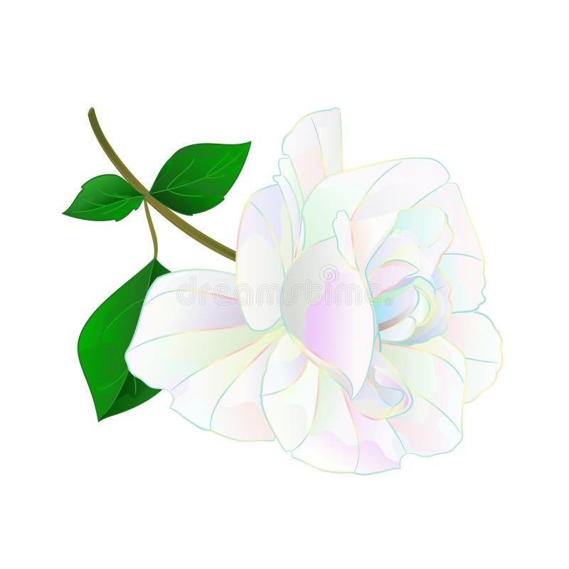 De multi gekleurde bloem nam stam en bladeren op een witte uitstekende vector botanische editable illustratie als achtergrond toe royalty-vrije illustratie