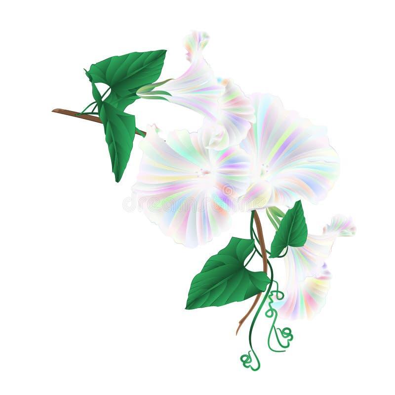 De multi gekleurde glorie van de bloemochtend op een witte uitstekende vector editable illustratie als achtergrond vector illustratie