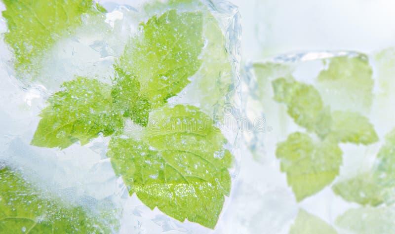 De munt van het ijs royalty-vrije stock afbeeldingen