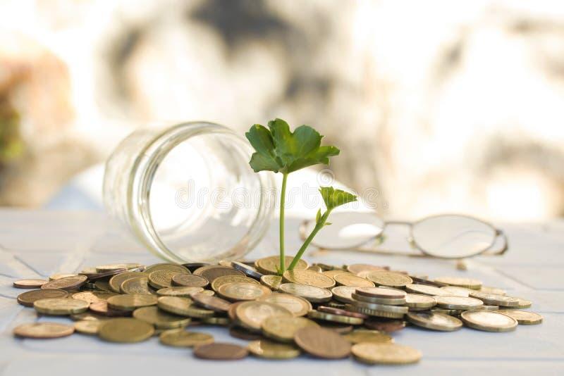 De muntstukken stapelden zich omhoog met jonge plant het groeien op stock afbeeldingen