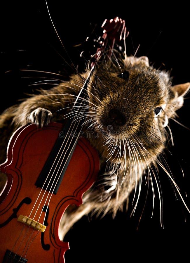 De musicus van het Deguhuisdier stock afbeelding