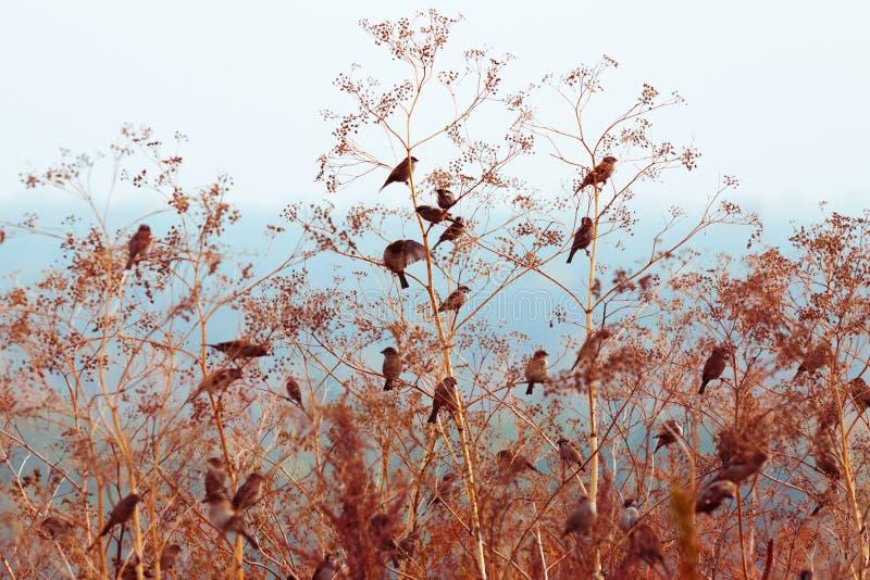 De mussen zitten op de takken van een struik in de herfst stock foto