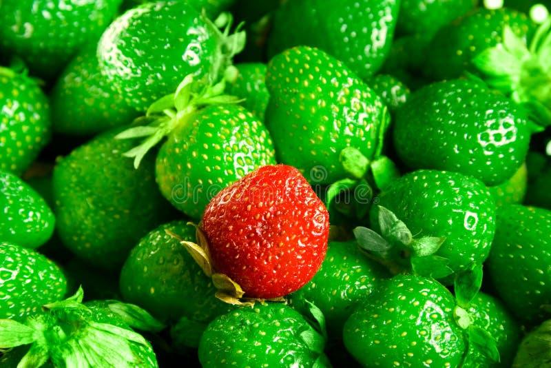 De mutant van aardbeien stock fotografie