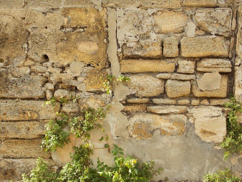 De muur van Coquina royalty-vrije stock fotografie