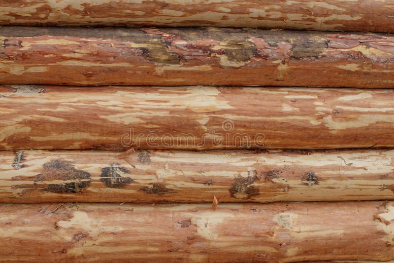 De muur van het huis, gehakte pijnboom De logboeken worden ontruimd van schors stock afbeelding