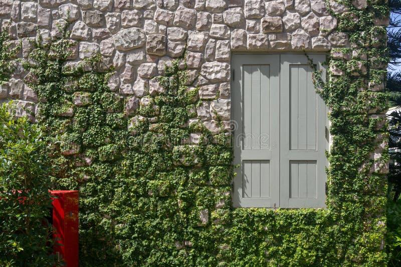 De muur van het steenvernisje met venster en installaties royalty-vrije stock afbeelding