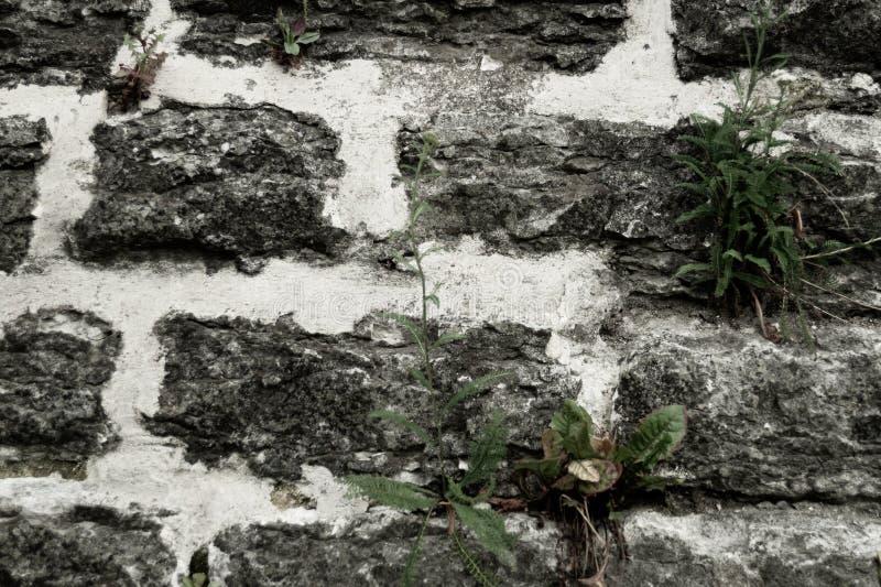 De muurachtergrond van de steen Abstracte grijze grungetextuur rotsachtig bakstenen muurmetselwerk royalty-vrije stock foto's