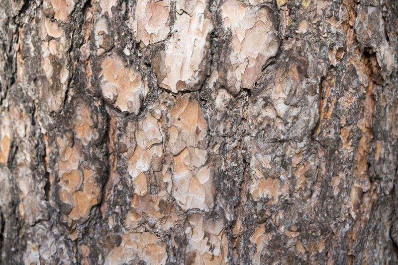 De naadloze achtergrond van de boomschors Bruine tileable textuur van de oude boom stock foto
