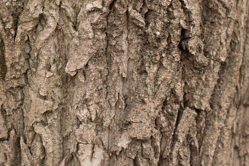 De naadloze achtergrond van de boomschors Bruine tileable textuur van de oude boom stock fotografie