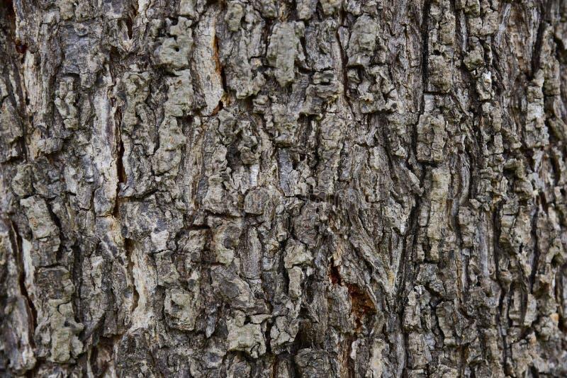De naadloze achtergrond van de boomschors Bruine tileable textuur van oud royalty-vrije stock afbeelding