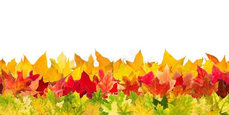 De naadloze bladeren van de de herfstesdoorn royalty-vrije stock foto's