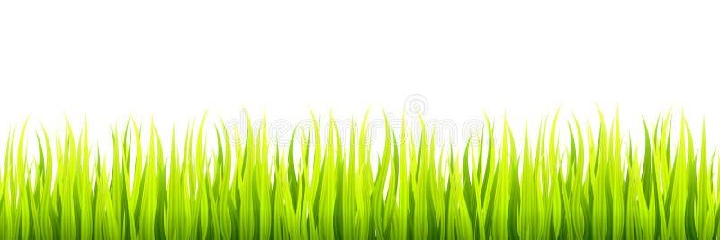 De naadloze lijnen van het de lentegras voor het scherpen, footer en decoratie De de lentespruiten groeit in een daglicht royalty-vrije illustratie